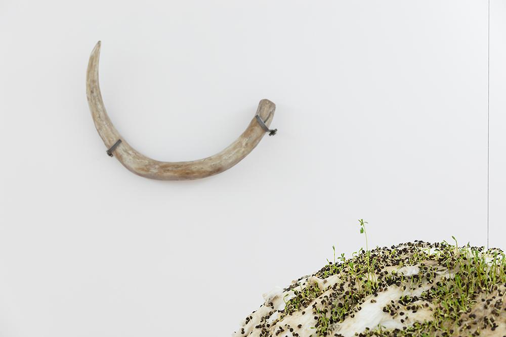 """""""Défense de mammouth"""" – collection de la cellule d'archéologie du Lot, """"Sans titre"""" (boule de lentilles) - Michel Blazy, Vue de l'exposition """"Pendant que les champs brûlent"""", Maison des Arts Georges et Claude Pompidou, 2020. Photo © Yohann Gozard."""
